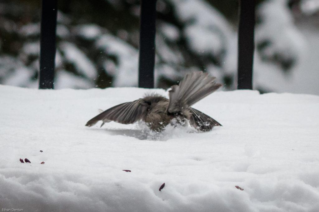 What Bird Wednesday