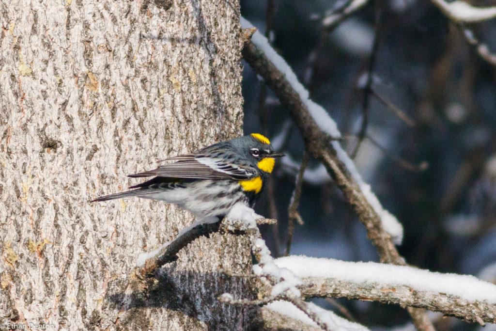 Canmore-Spring-Bird-Walks 28-04-19 (2 of 7)