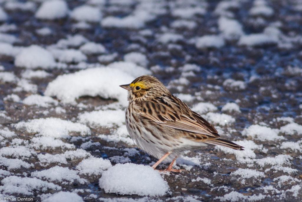 Canmore-Spring-Bird-Walks 28-04-19 (6 of 7)