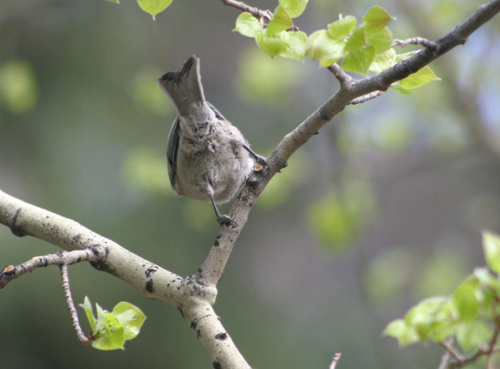 Unknown bird species
